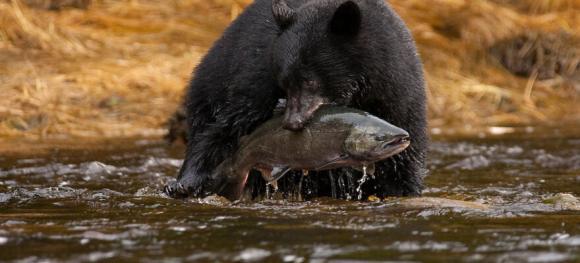 Featureslider-Bear