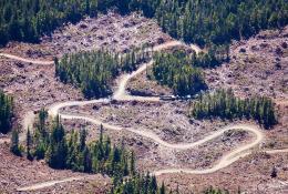 East-Creek-Rainforest-TJ-Watt-6 - WEB